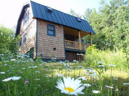cabin daisys